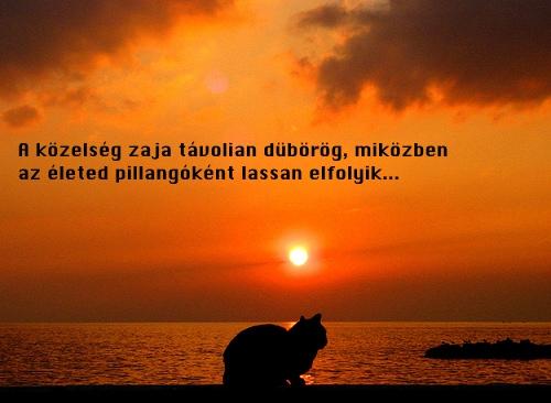 sunsetcat